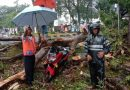 Pohon Tumbang di Medan  Tertimpa Pengendera Sepeda Motor Hingga Kritis, Dilarikan ke RS Elisabeth