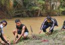 UKM JBM Kembali Tanam Bibit Eucalyptus di DAS Sungai Babura sebagai Bahan Tangkal Covid-19