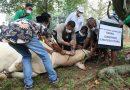 Bupati Tapsel Bagikan 100 Paket Daging Qurban di Desa Siuhom